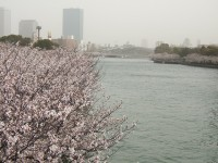 The best places for cherry blossom viewing in Japan