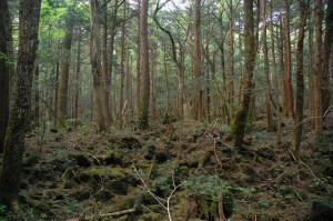 Aokigahara Forest, photo by Simon le Nippon on Flickr