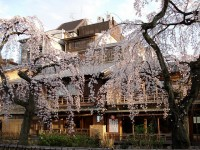 Best Traditional Japanese Restaurants in Kyoto