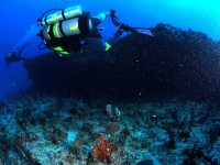 Best Scuba Diving Spots in Japan