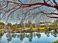 Must-see Japanese Gardens in Nagoya